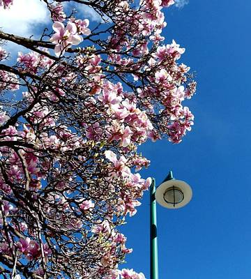 Photograph - Green Lamp Standard And Magnolias by Will Borden