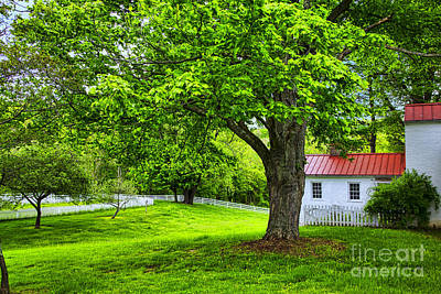 Photograph - Green Lawn by Rick Bragan