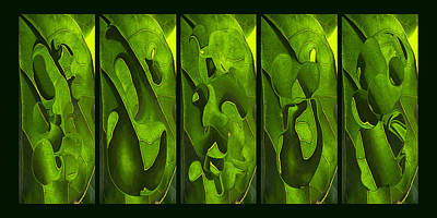 Photograph - Green Leaf Abstract by Theo OConnor