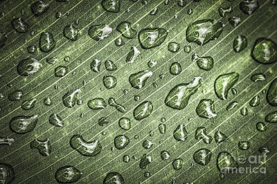 Natural Abstract Photograph - Green Leaf Abstract With Raindrops by Elena Elisseeva
