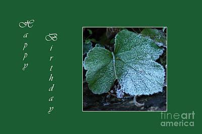 Photograph - Green Leaf Card by Randi Grace Nilsberg