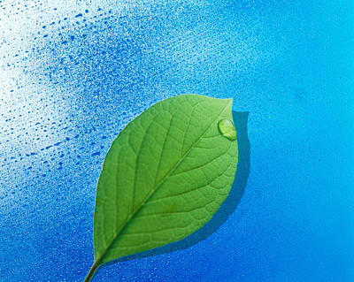 Green Leaf Floating Above Streaked Art Print by Panoramic Images