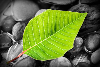 Photograph - Green Leaf by Marco Oliveira