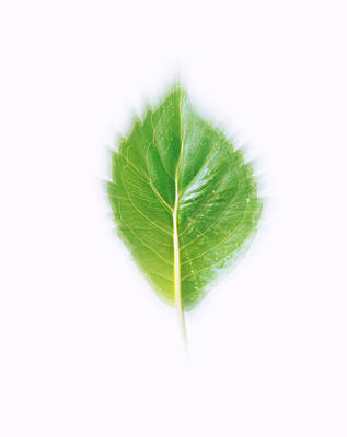 Leaf Surface Photograph - Green Leaf On Beige Background by Panoramic Images