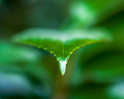Photograph - Green Leaf by Todd Soderstrom