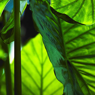 Art Print featuring the photograph Green Leaf Trilogy I by Silke Brubaker