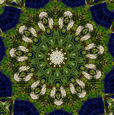 Photograph - Green Leaf White Flower Mandala by Beth Sawickie
