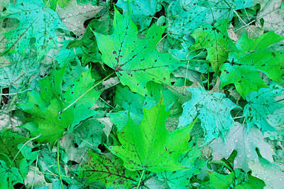 Photograph - Green Leaves by Aimee L Maher Photography and Art Visit ALMGallerydotcom