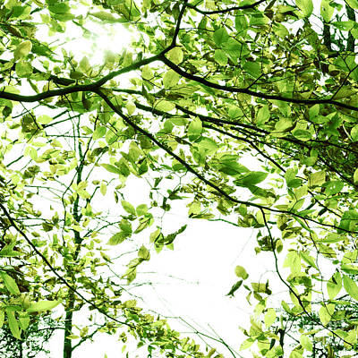 Green Leaves Art Print by Blink Images