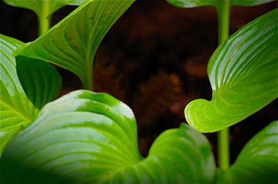 Photograph - Green Leaves by Colleen Renshaw