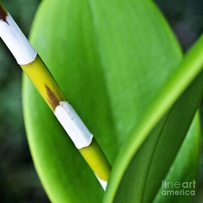 Green Leaves Art Print by Heiko Koehrer-Wagner