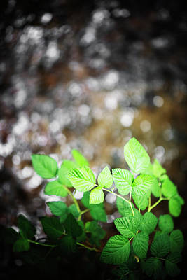 Point Reyes National Seashore Photograph - Green Leaves With A Dappled Water by Ron Koeberer