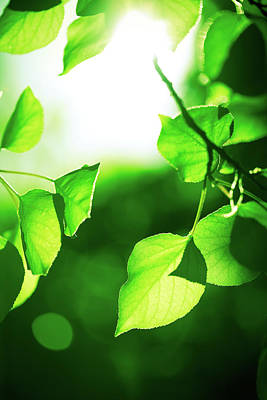 Sunlight Photograph - Green Leaves With Sunlight by Jeja