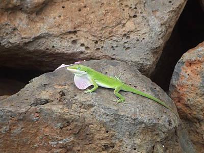 Photograph - Green Lizard by Richard Reeve