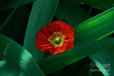 Photograph - Green Loves Red Loves Green by Byron Varvarigos