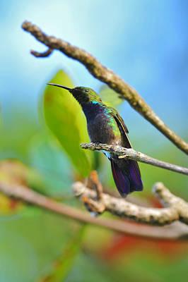 Photograph - Green Mango by Alan Lenk