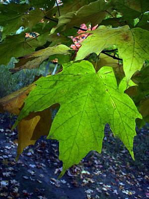 Green Maple Leaves Art Print by Michel Mata