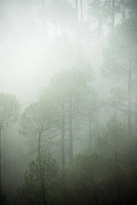 Green Mist Art Print by Rajiv Chopra