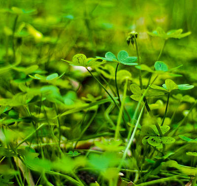 Green Morning  Art Print by Andrew Raby