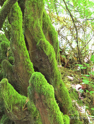 Photograph - Green Moss by Mary Mikawoz