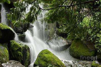 Green Moss Waterfall Art Print