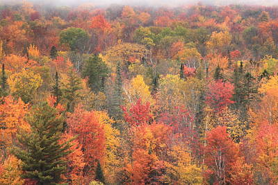 Photograph - Green Mountain Fall Foliage by John Burk
