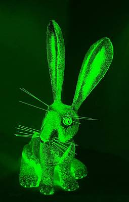 Photograph - Green New Mexico Rabbit by Rob Hans