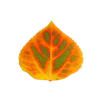 Digital Art - Green Orange Red And Yellow Aspen Leaf 5 by Agustin Goba