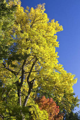 James Insogna Photograph - Green Orange Yellow And Blue by James BO  Insogna