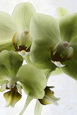 Contemporary Photograph - Green Orchid by Ben and Raisa Gertsberg