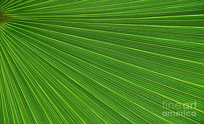 Kathleen Photograph - Green Palm Abstract by Kathleen Struckle