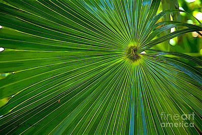 Photograph - Green Palm by Sally Simon