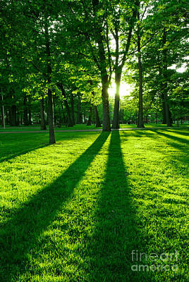 Sunrays Photograph - Green Park by Elena Elisseeva