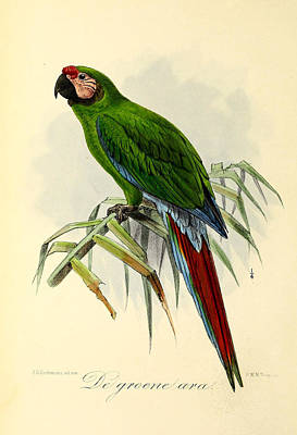 Parakeet Painting - Green Parrot by Dreyer Wildlife Print Collections