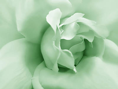 Photograph - Green Pastel Rose Flower by Jennie Marie Schell