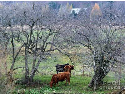 Photograph - Green Pastures by Christian Mattison