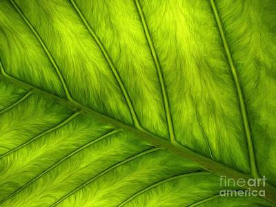 Photograph - Green by Peggy Hughes