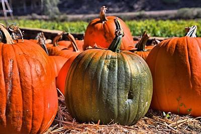 Olantern Photograph - Green Pumpkin by Scott Hill
