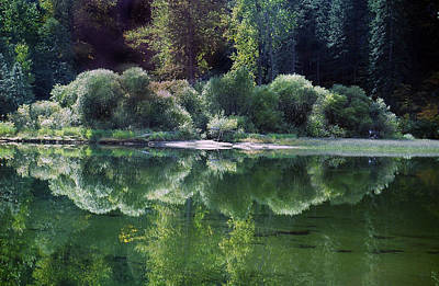 Photograph - Green Reflections by John Bushnell