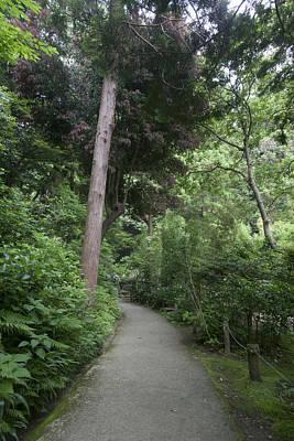 Photograph - Green Road by Masami Iida