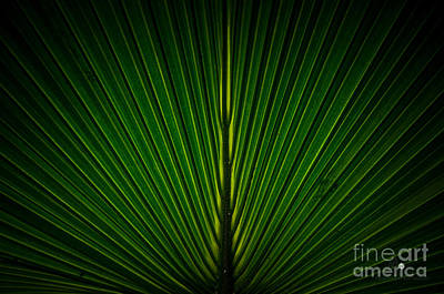 Photograph - Green by Ronald Grogan