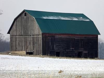 Fall Animals - Green Roof Barn by Linda Kerkau