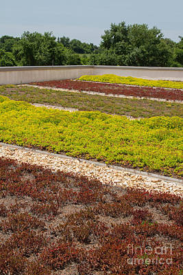 Photograph - Living Roof Garden by Chris Scroggins