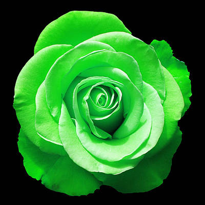 Photograph - Green Rose by Aimee L Maher ALM GALLERY