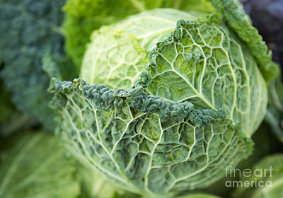 Vegetable Market Photograph - Green Ruffled Cabbage by Rebecca Cozart