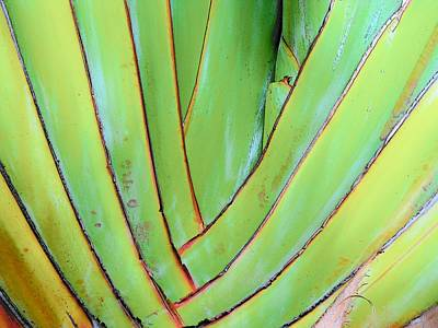 Photograph - Green by Strangefire Art       Scylla Liscombe