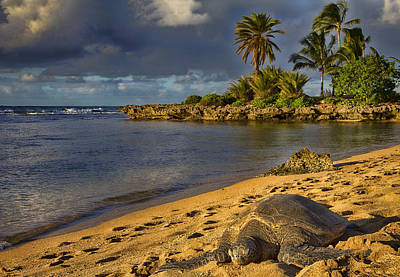 Haleiwa Photograph - Green Sea Turtle At Sunset by Douglas Barnard