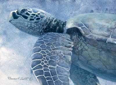 Painting - Green Sea Turtle by Randall Scott