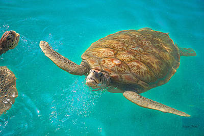 Photograph - Green Sea Turtle Surfacing by Marie Hicks