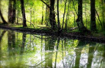 Canadian Marsh Photograph - Green Shadows by Valentino Visentini